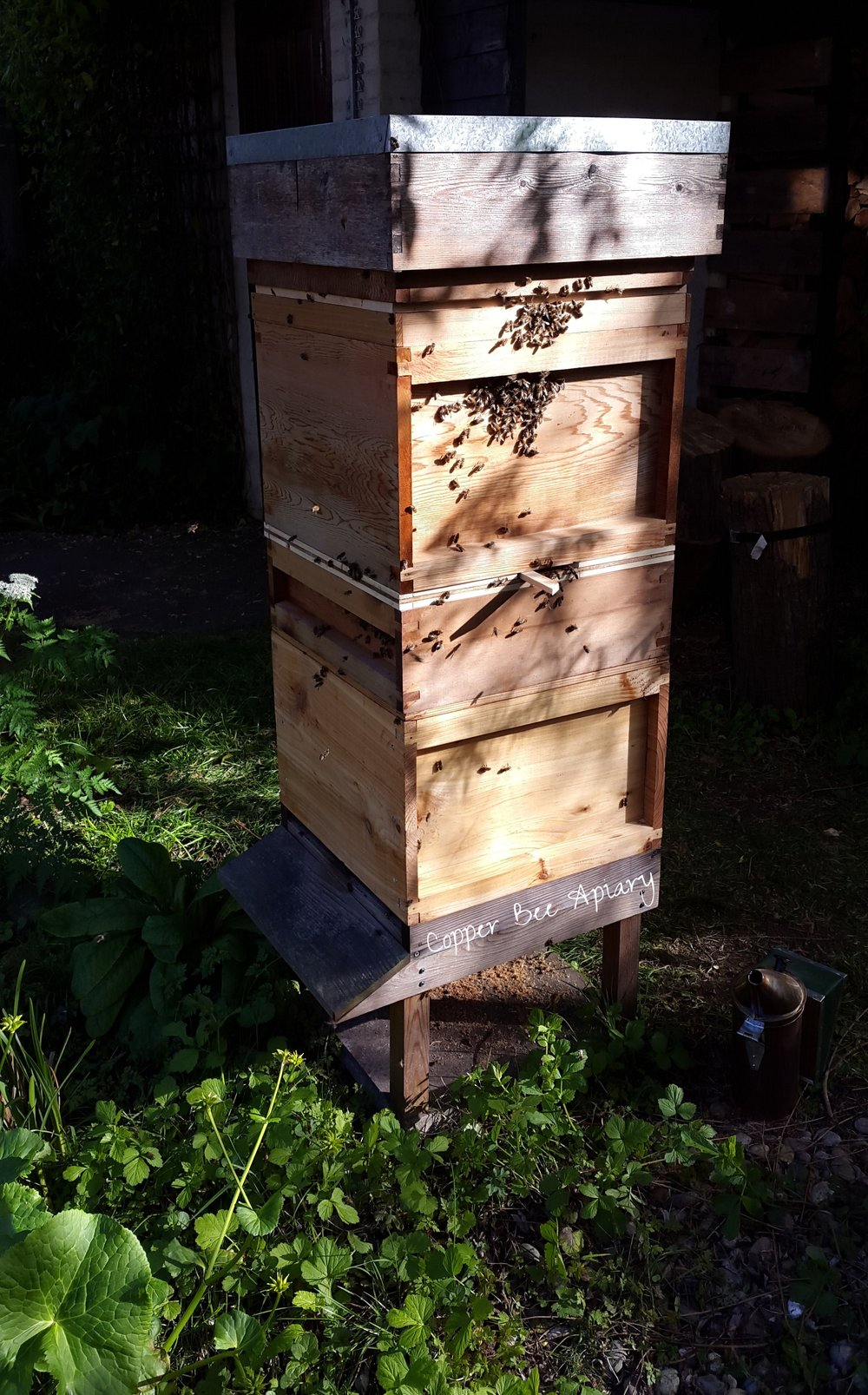 Vertically split Pond Hive with new Snelgrove entrance