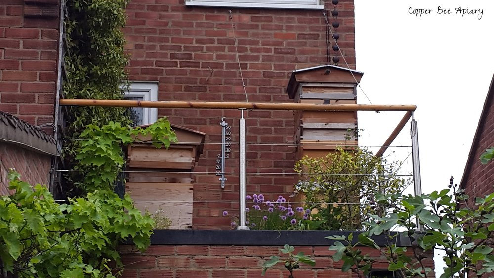 Gin terrace with Disc Hive and high-rise Cedar Hive