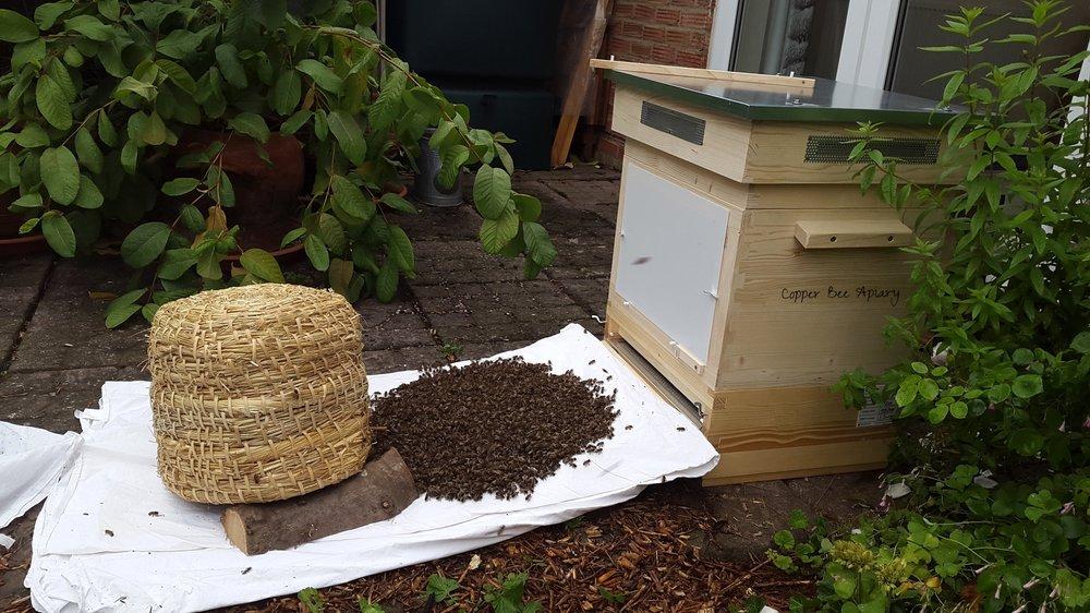 Time zero - bees shaken on to sheet
