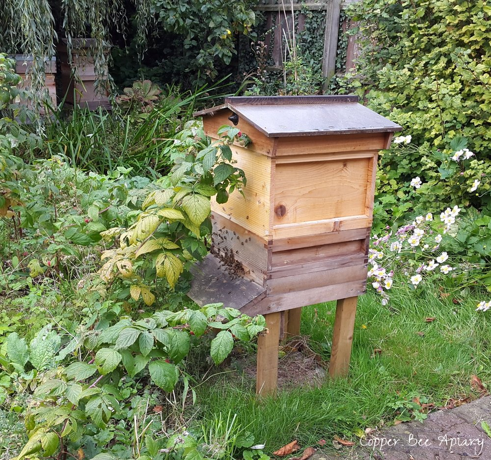 Busy bees of the Copper Hive