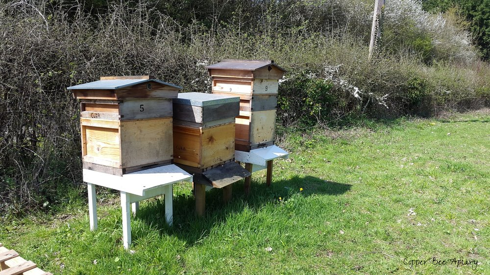 Apple orchard beehives