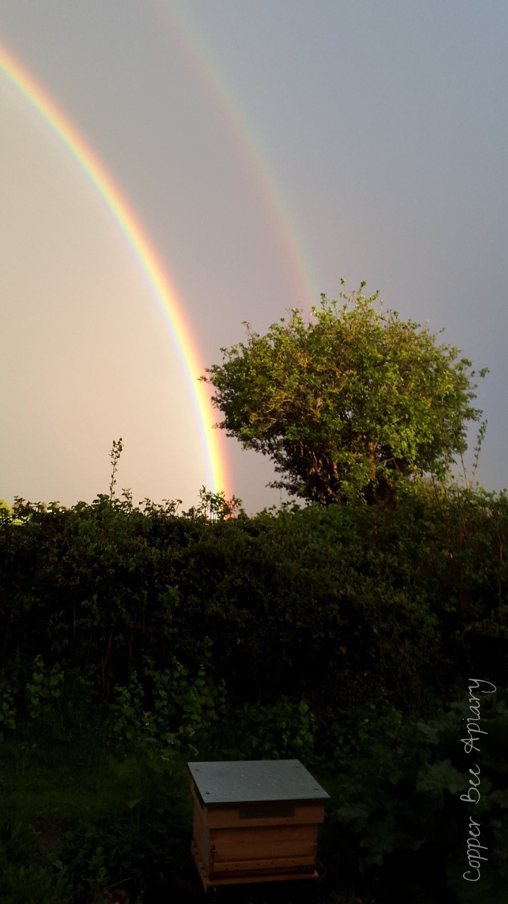 The beehive at the end of the rainbow