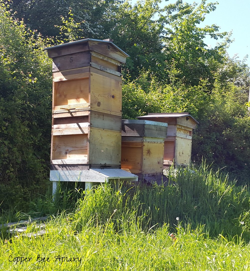 Hives in the orchard