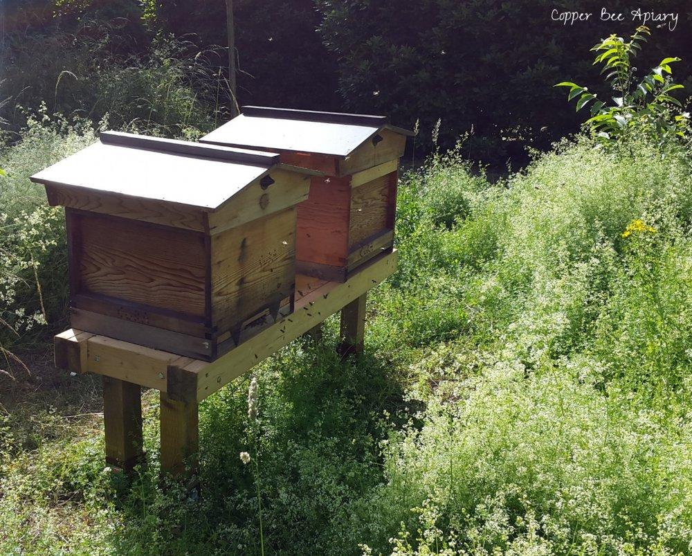 Queen Peony's Hive