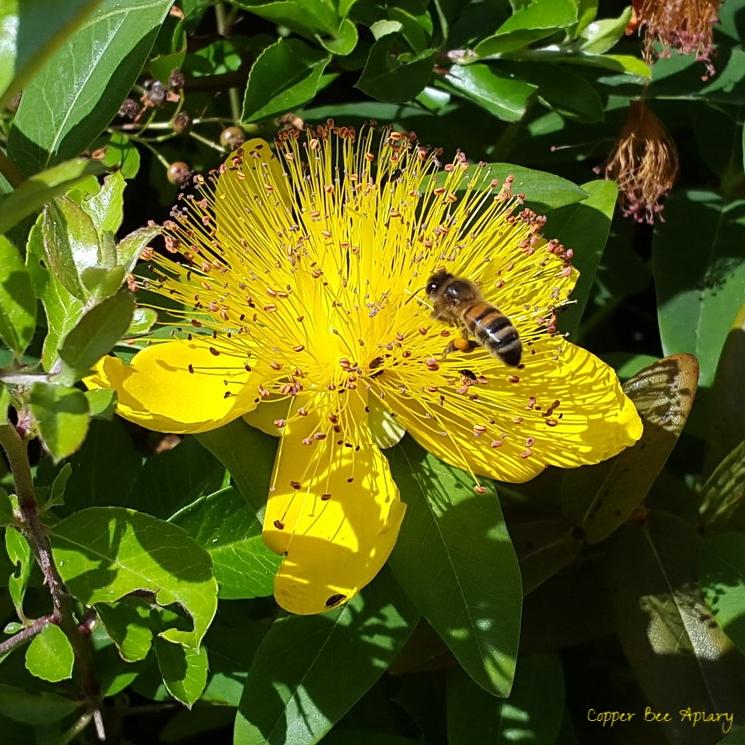 Pollen Foraging