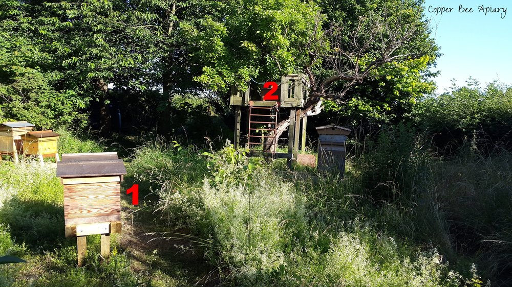 Bait hive locations