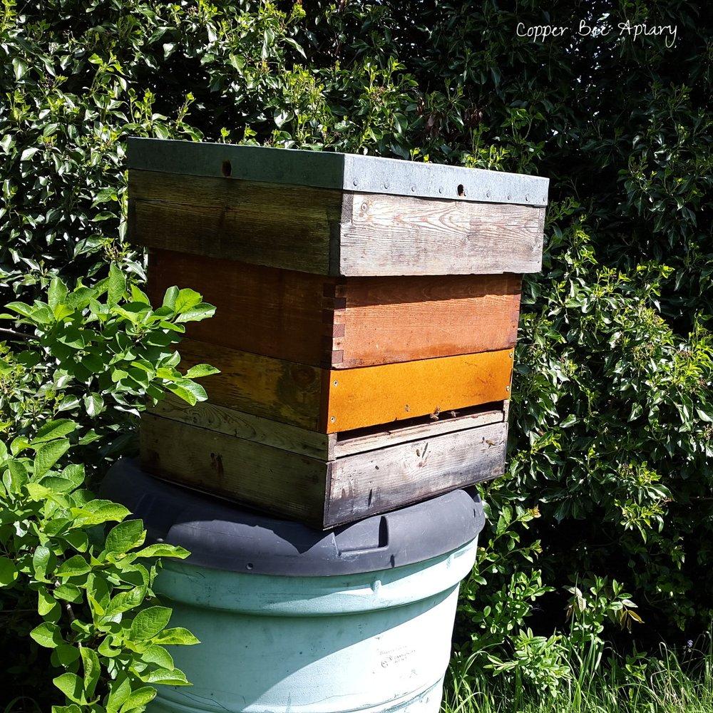 Smith (bait) hive with wide doorway