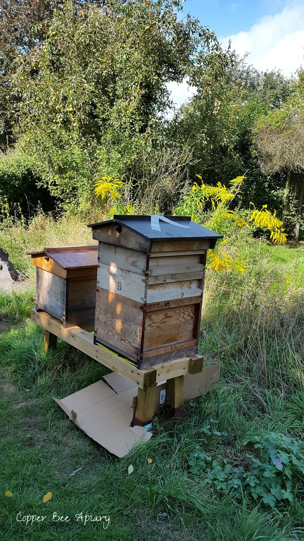 Mab (left) and Titania (right) on their final day before treatment/destruction. The floorboard is inserted in the Titania hive, with rags on it to absorb petrol. A sheet of cardboard is underneath to catch leaks. Bees come and go at the time of the photograph, but at dusk the Titania hive was taped closed.
