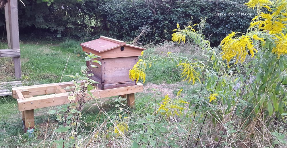 Queen Mab's hive, treated with antibiotics, now stands alone.