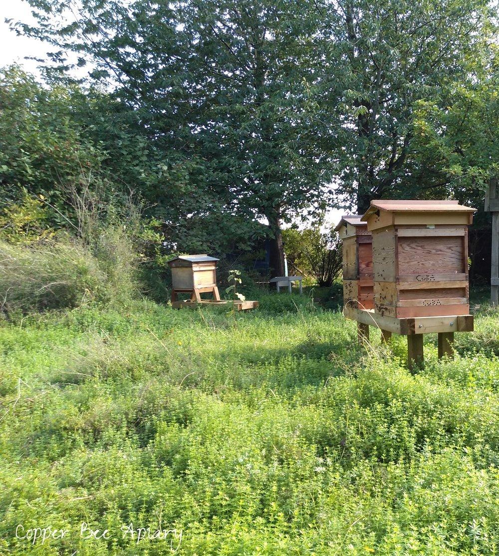 September apiary