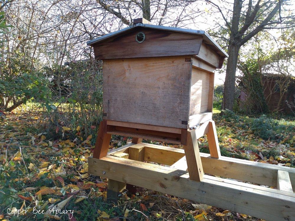 Queen Romaine's hive