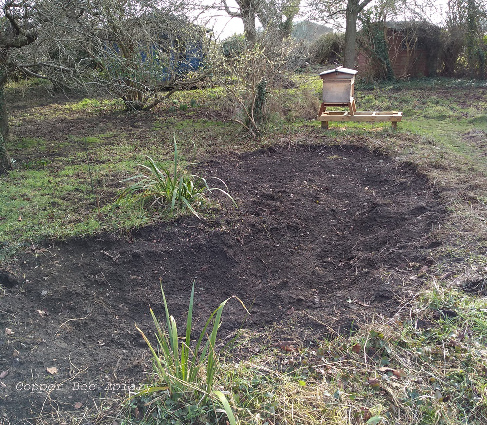 Pond digging site in front of Queen Romaine's hive.