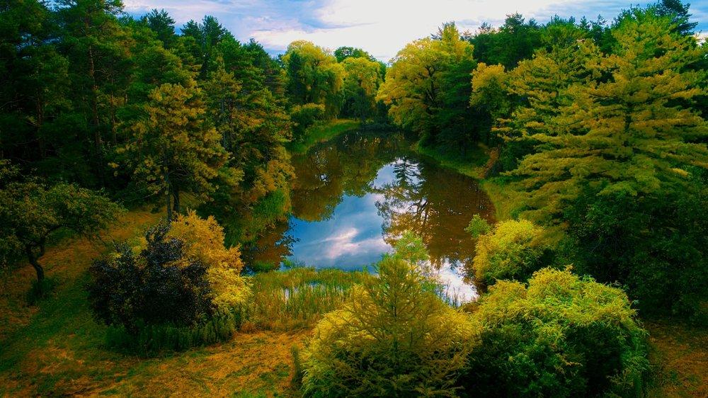 pond (Michael DeRosa).jpg