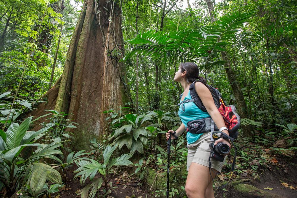 Buttress Roots_Sensoria_Costa Rica
