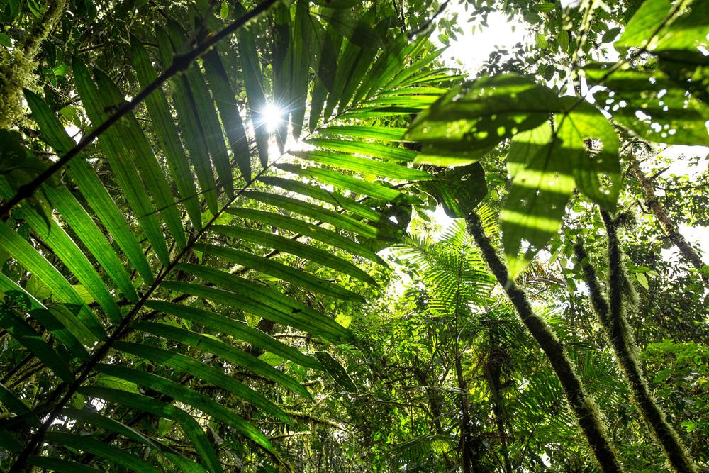 Rain forest_Sensoria_Costa Rica