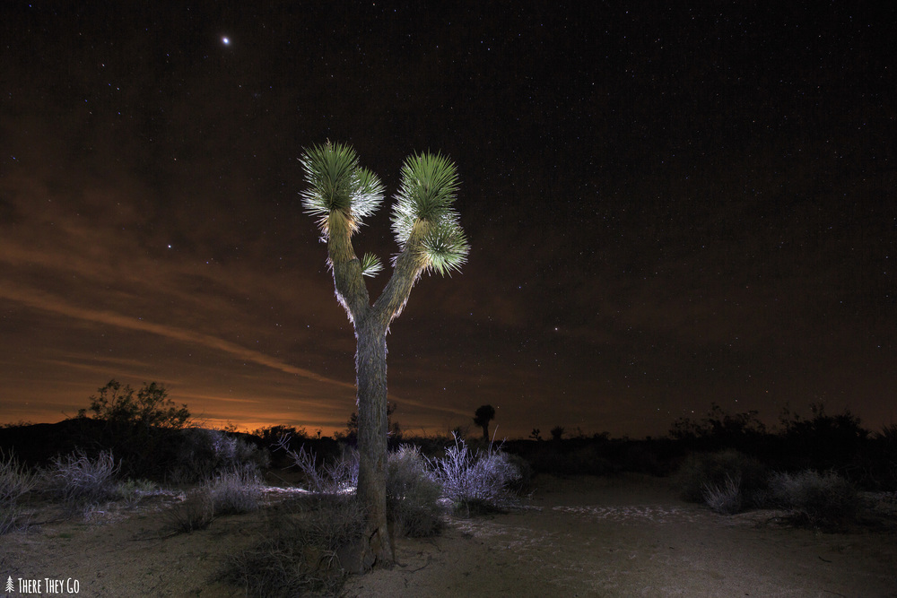 This Joshua Tree was captured using a combination of an off camera flash and my Black Diamond headlamp for light painting. Using my Phottix wireless radio transceivers, I placed my Canon 580 EXII flash behind the Joshua Tree at 1/4 power. I then used my headlamp to light paint the front of the tree and the surrounding ground around the tree. Camera: Canon 5d Mark III Lens: Canon 16-35mm f/2.8 at 24mm Camera settings: Shutter: 25'' F/5.6 ISO 1000