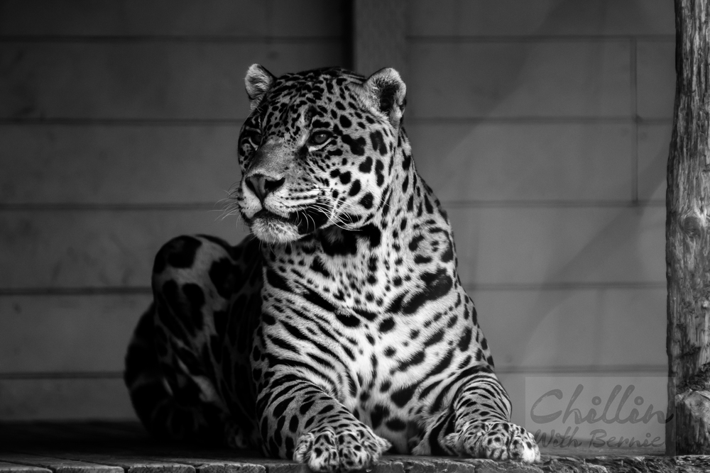 Zoo-Day (18 of 35).jpg