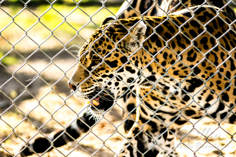 Zoo-Day (20 of 35).jpg
