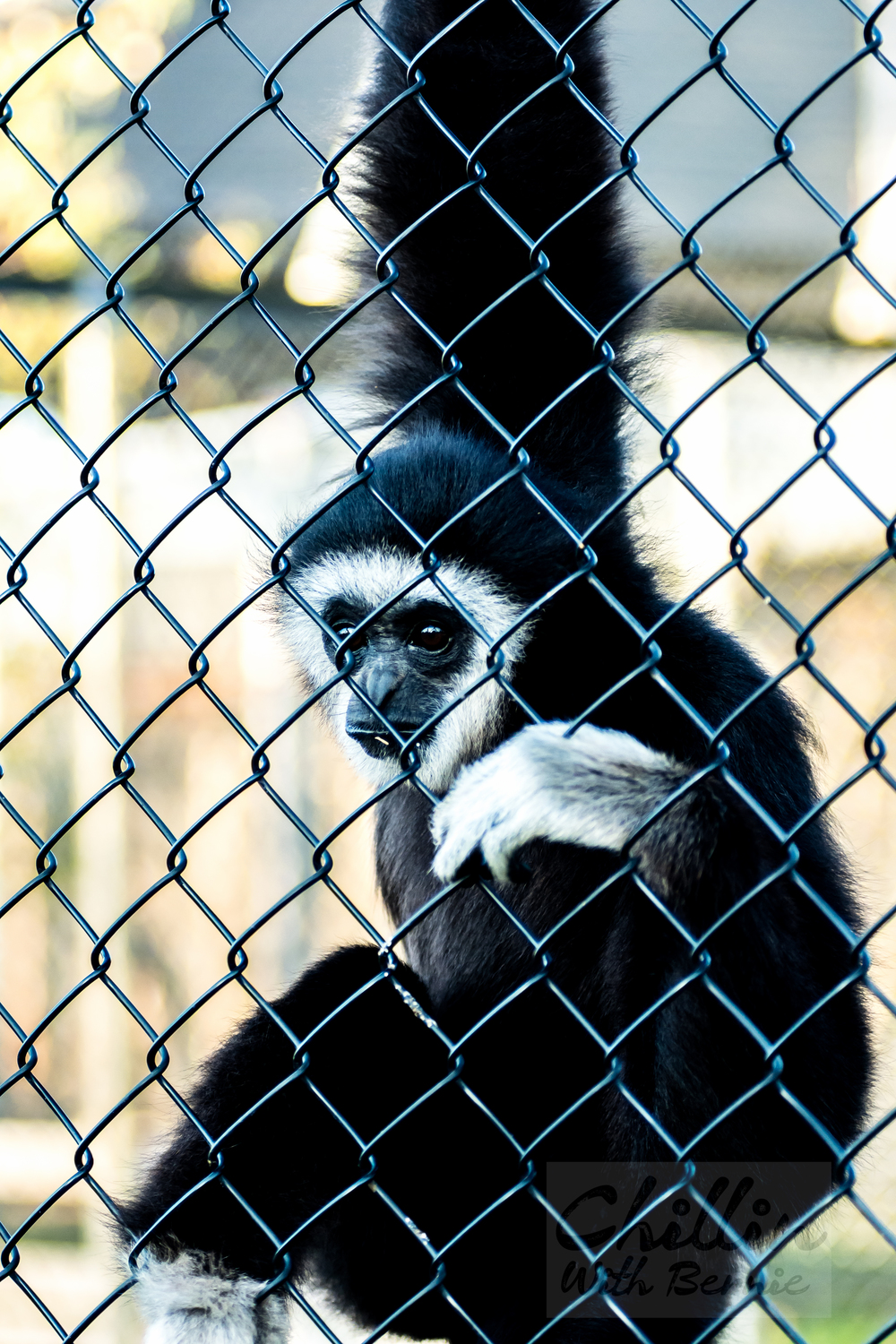 Zoo-Day (26 of 35).jpg