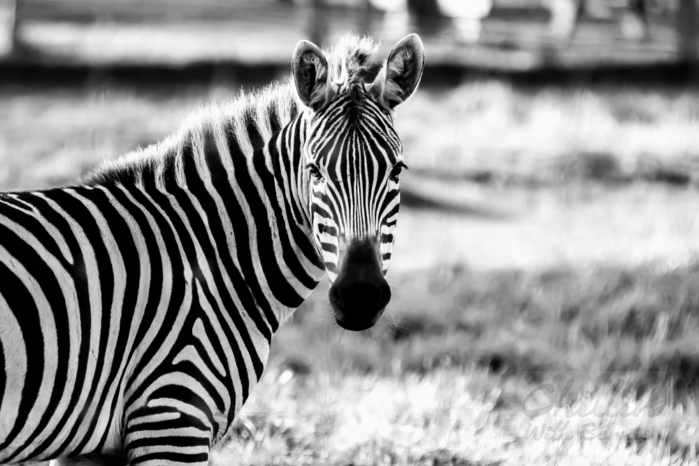 Zoo-Day (29 of 35).jpg