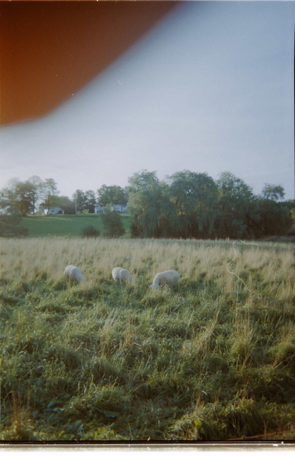 Film-Round2-31.jpg