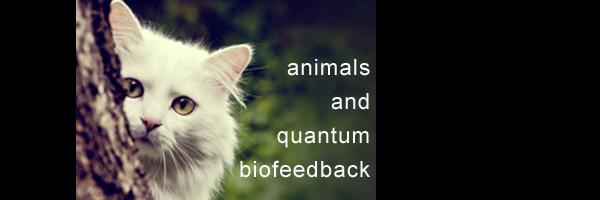 animalsQB.jpg