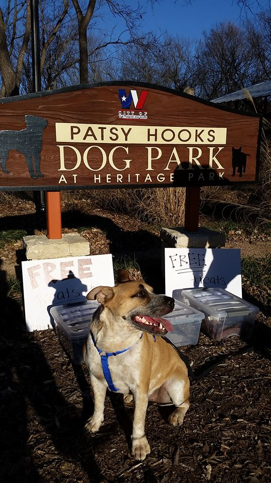 dog park.jpg