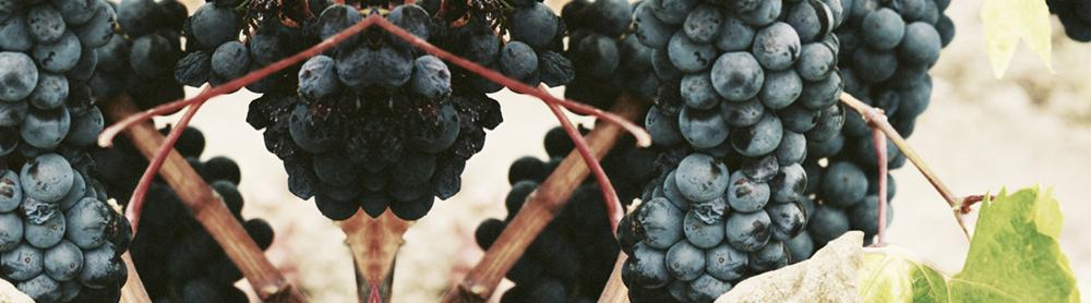 grapes.jacklynbrown.swiecicki.marketing-blog