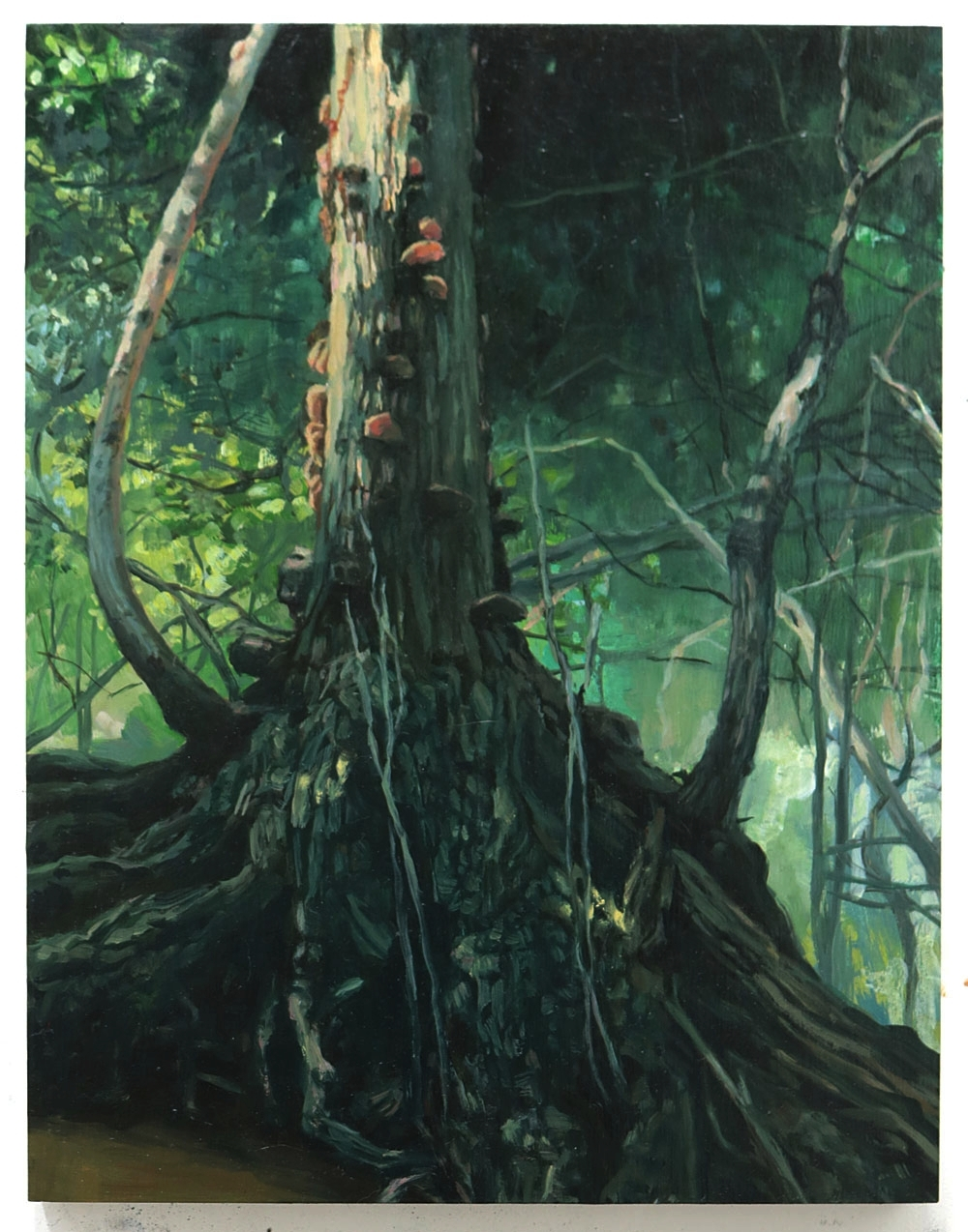 Tree with Fungus