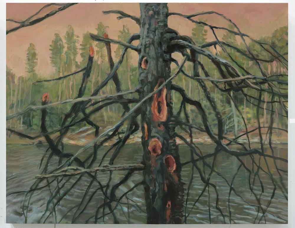 Tree at Beaver Lake