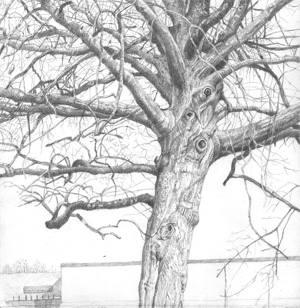 Parking Lot Tree (4)