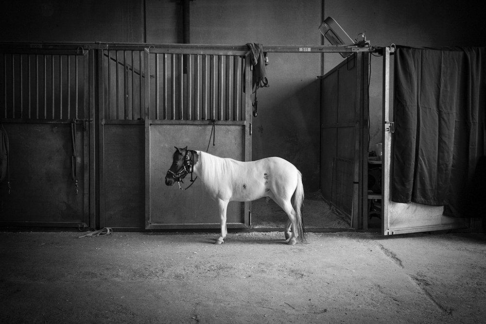 "Longview Museum of Fine Arts 2019 ""Focus on Photography"" exhibit…Juror: o Rufus lovett"