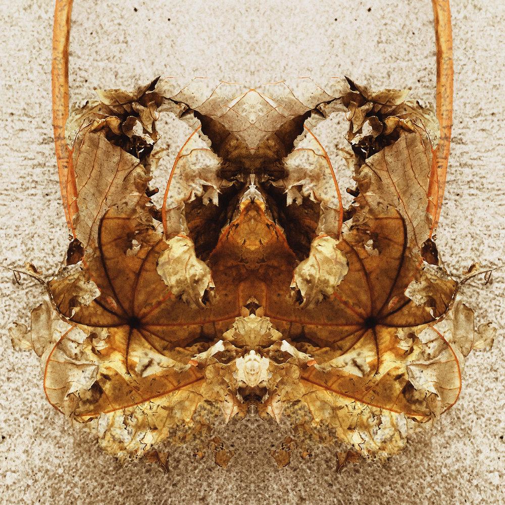 Ricinus | Leaf Dance