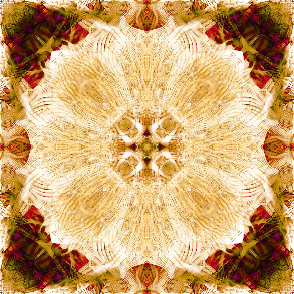 Passiflora | Tequila Blossom