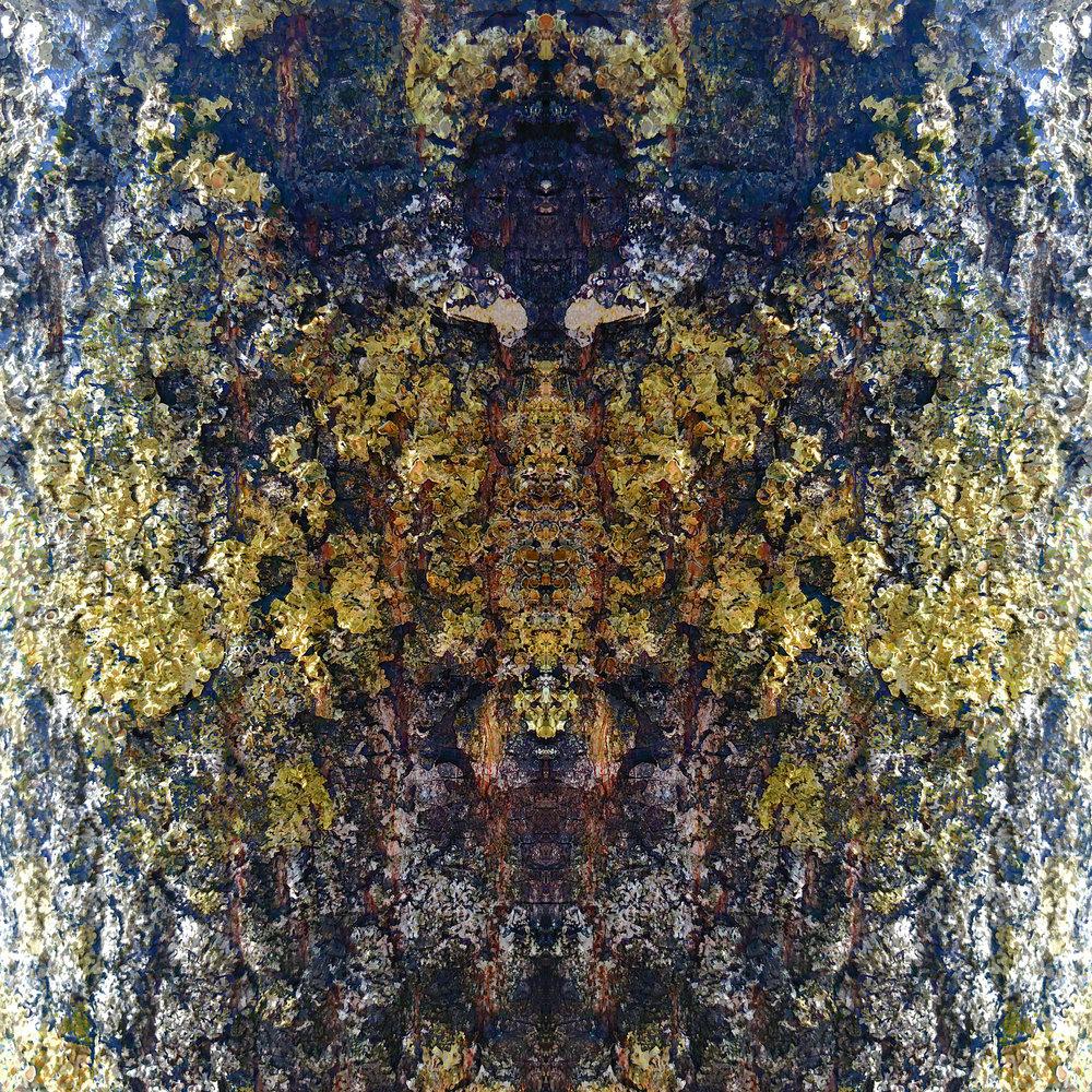 Lichen | Guardian