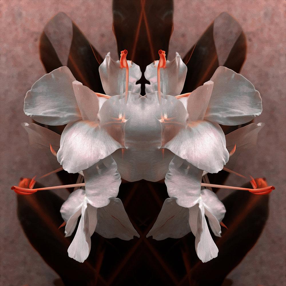 Ginger Blossoms | Presence