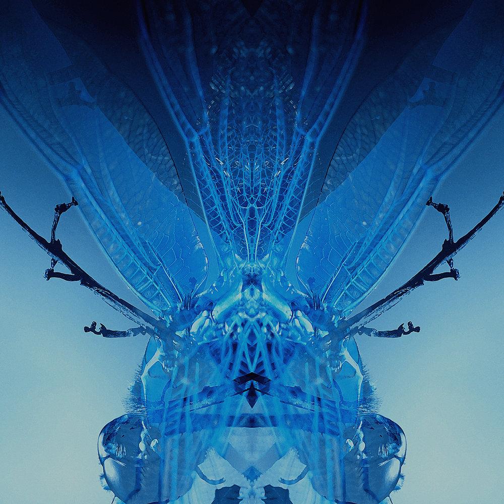 Dragonfly-Blue
