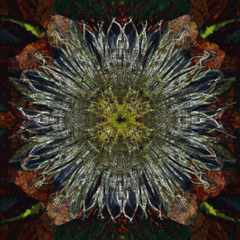 Passiflora | Rustica