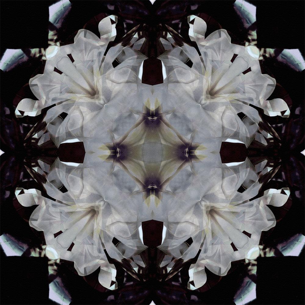 Plumeria | Alien Quadrants