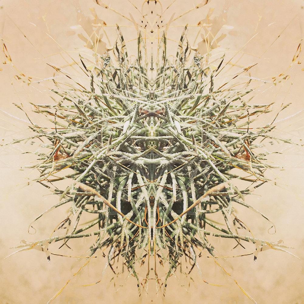 Ball Moss | Reflection 1