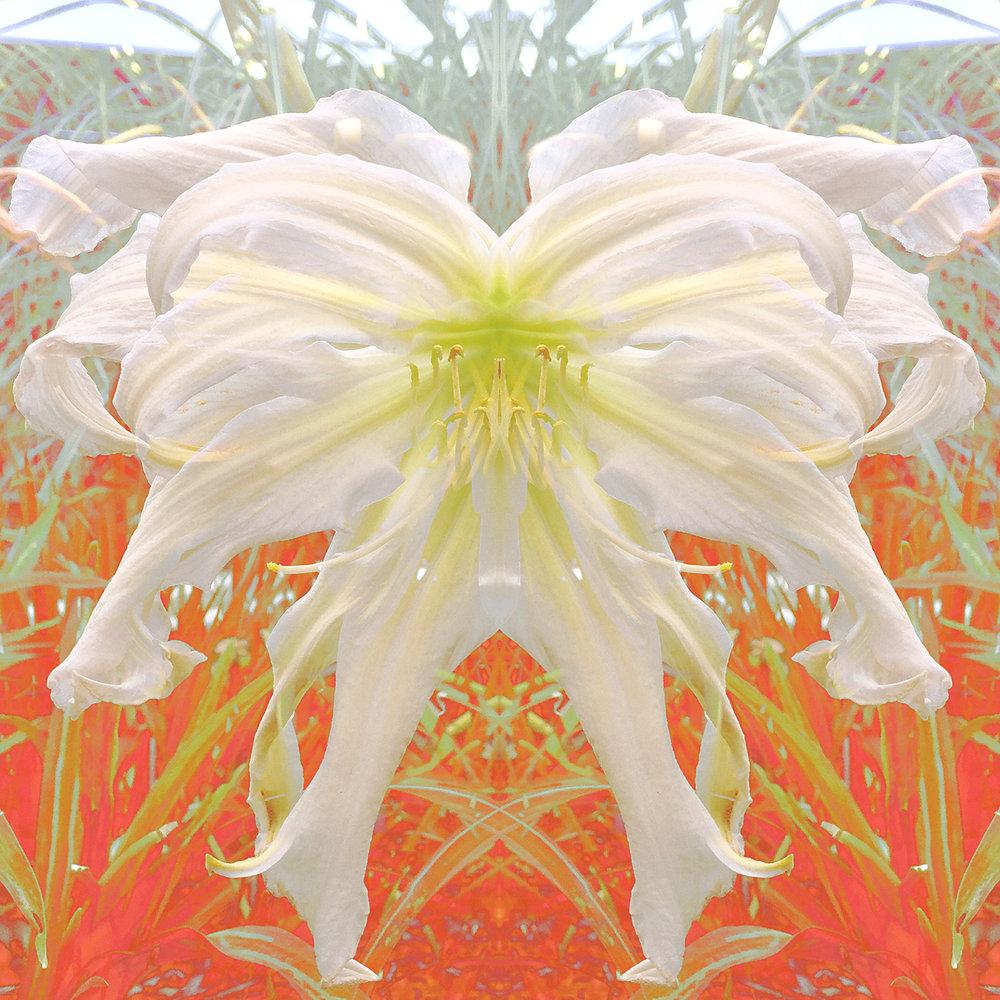 Lillian's Thin Ice | Angel Wings