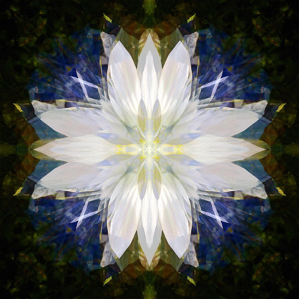 Fallen Canna | Soul's Angel