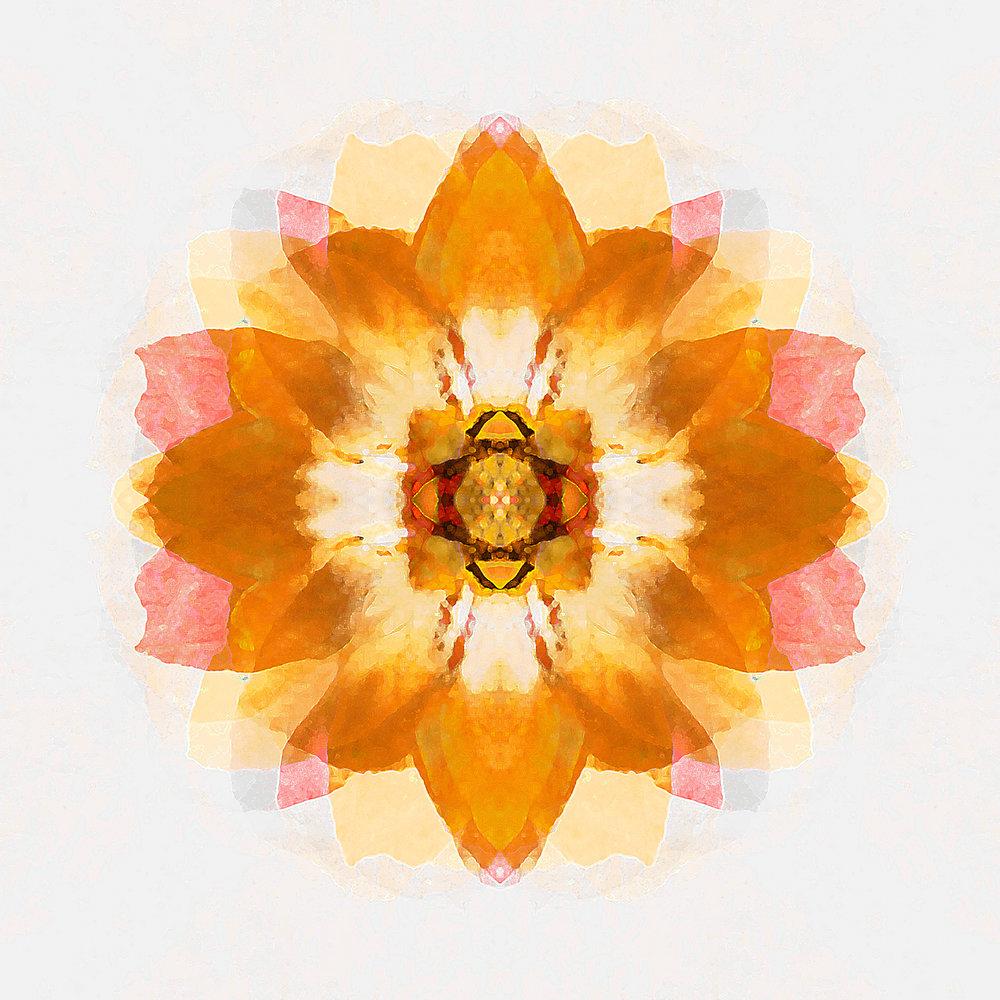 Blossom | Golden Memories