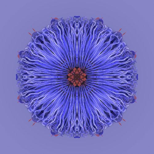 Passiflora | Denim Dreams