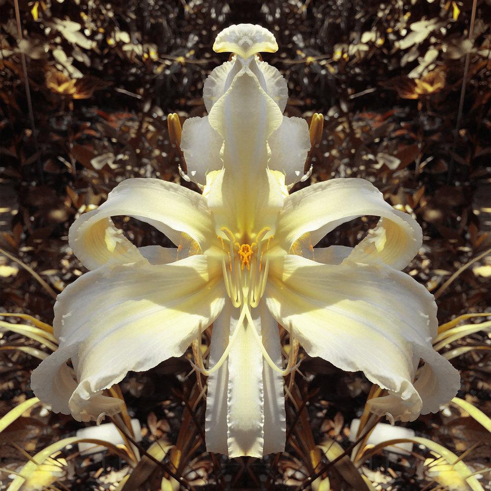 Lillian's White Lies | Garden Goddess