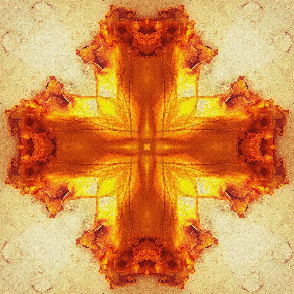 Chalice Flower | Golden Glow