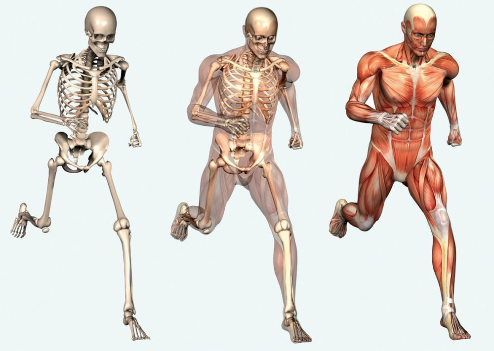 human-body-muscle-anatomy-human-body-diagram-of-bones-and-muscles-tag-human-anatomy-of-bones.jpg
