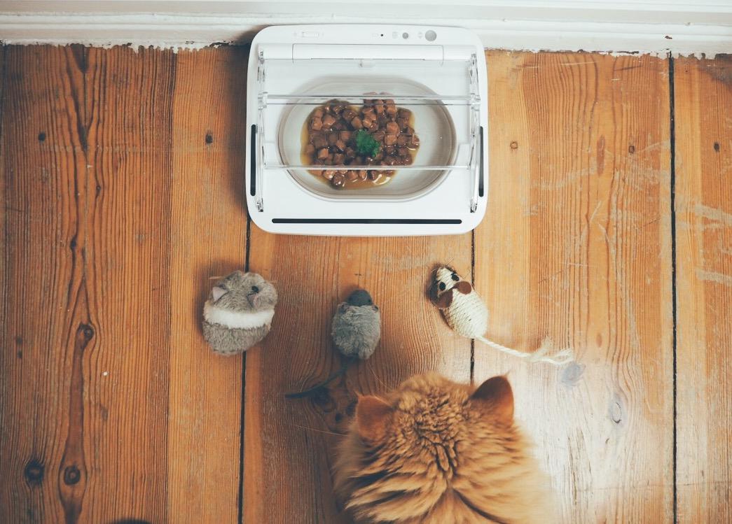 Emil hat Hunger // So bleibt unser Katzenfutter immer frisch (Sponsored Post)