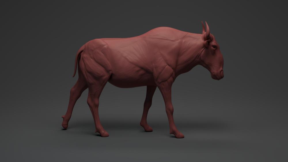 Bull_update.png