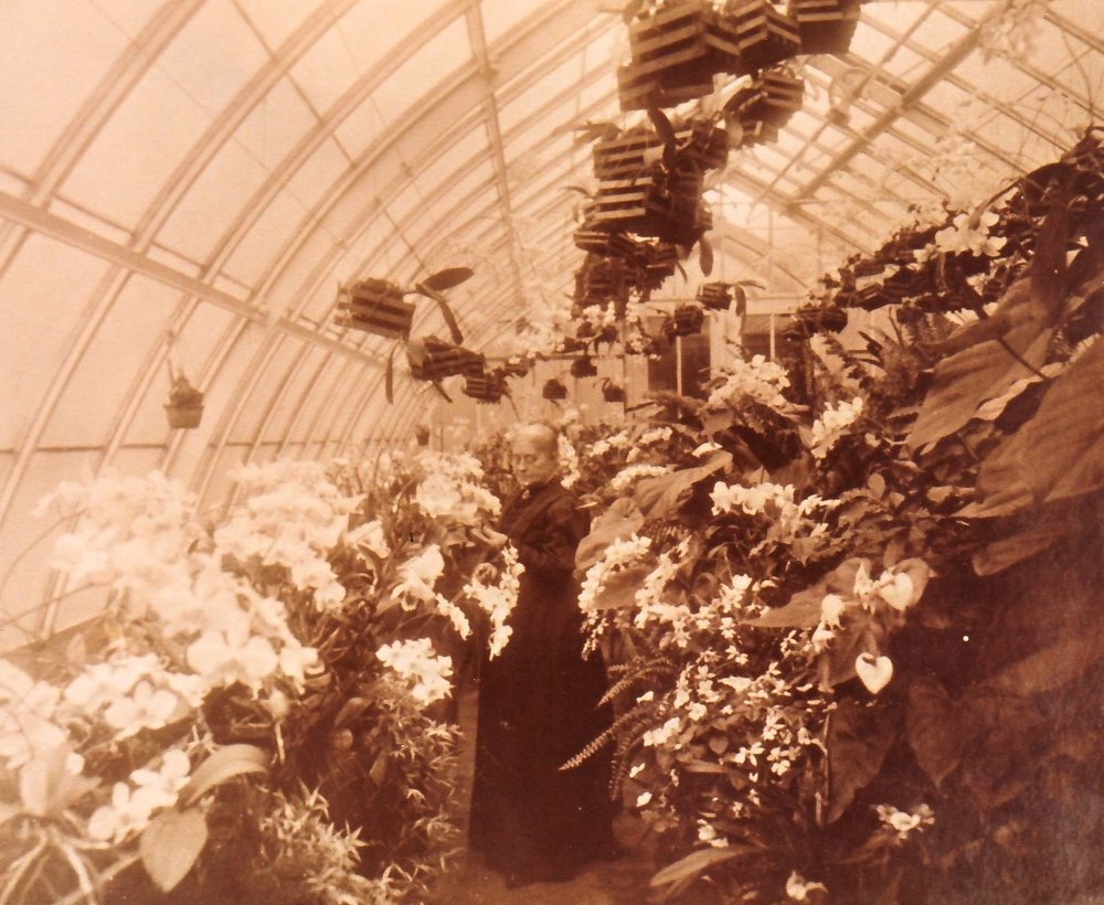 Mary Ann Tuttle in her orchid greenhouse, c. 1925